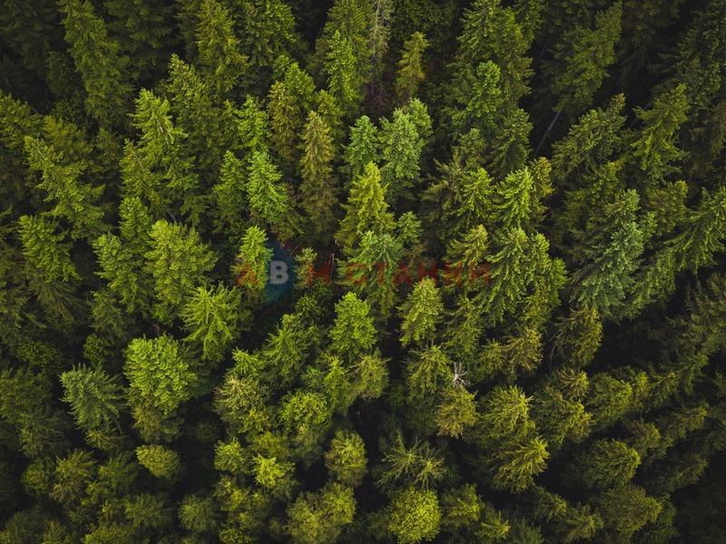 В России появится институт лесной охраны